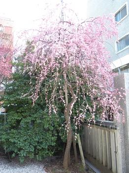 120320北野牛神社 (16)_S.JPG