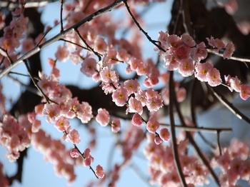 120320小石川後楽園 (10)_S.JPG