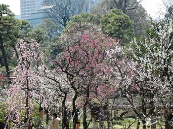 120320小石川後楽園 (12)_S.JPG