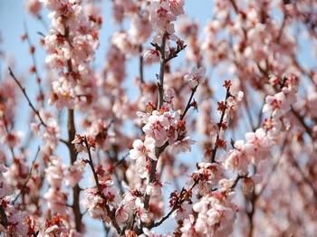 120320小石川植物園 (10).JPG