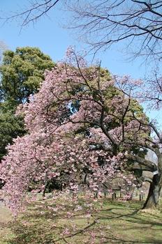 120320小石川植物園 (191)_S.JPG