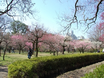 120320小石川植物園 (2).JPG