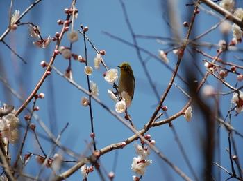 120320小石川植物園 (3).JPG