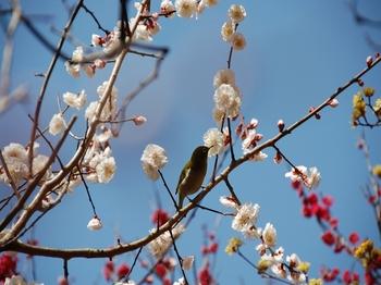 120320小石川植物園 (4).JPG