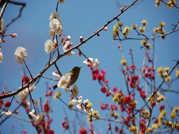 120320小石川植物園 (5).JPG