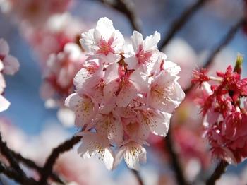 120320小石川植物園 (7).JPG