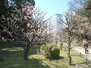 120329浜離宮菜花 (56)_S.JPG