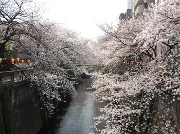 120406中目黒桜 (18)_S.JPG