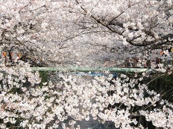 120406中目黒桜 (35)_S.JPG
