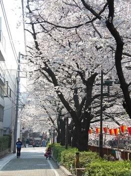 120406中目黒桜 (40)_S.JPG