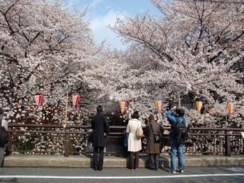 120406中目黒桜 (45)_S.JPG