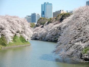 120408千鳥ヶ淵桜 (86)_R.JPG