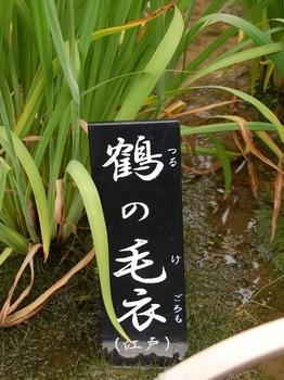 120623堀切菖蒲園 (38)_R.JPG