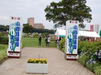 120623小岩菖蒲園 (6)_R.JPG