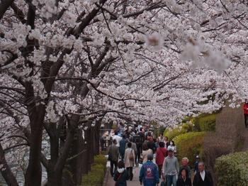 130323目黒川桜 (35-2)_R.jpg