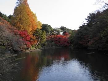 新宿御苑101127 (33)_S.JPG