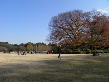 新宿御苑101205 (20)_S.JPG