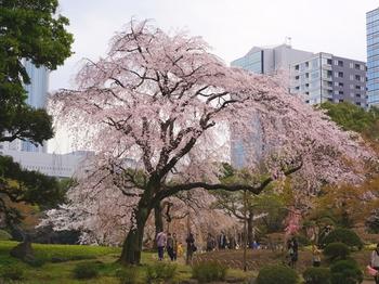 130323小石川後楽園 (38-2)_R.JPG